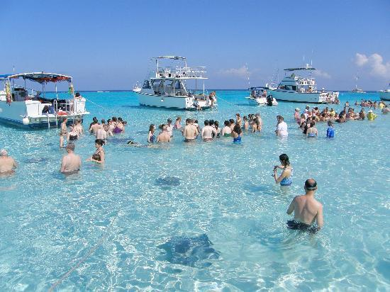George Town, Gran Caimán: Stingray City SadBar