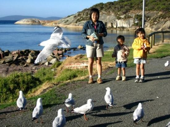 Albany, Avustralya: 阿文,阿和最喜欢的活动:喂海鸥!