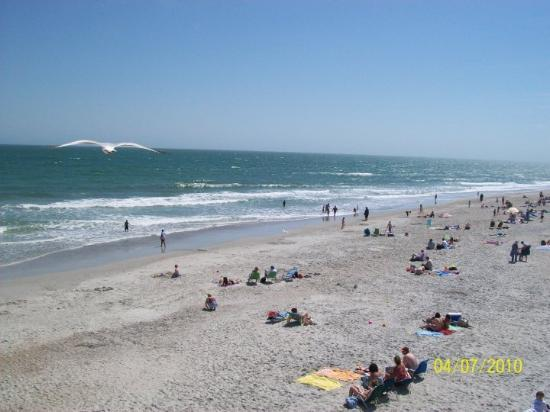 Wrightsville Beach, Carolina do Norte: The most amazing picture taken! Do you see the seagull?