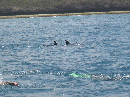 Sunset Beach Resort Zanzibar: Massimo nuota con i delfini