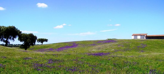 Wine a Day: The Alentejo in the Spring