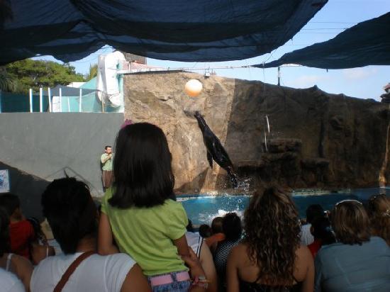 Acuario Mazatlan: Sea lion show.