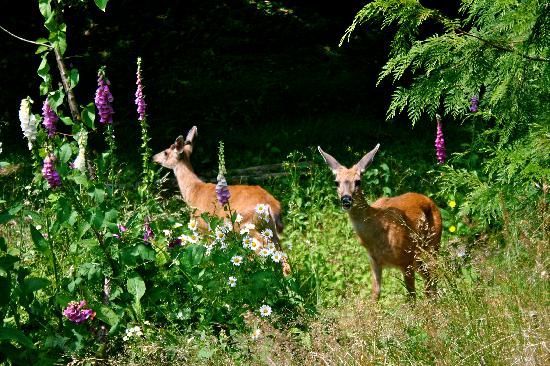 Creekside Bed and Breakfast : Some of our visitors