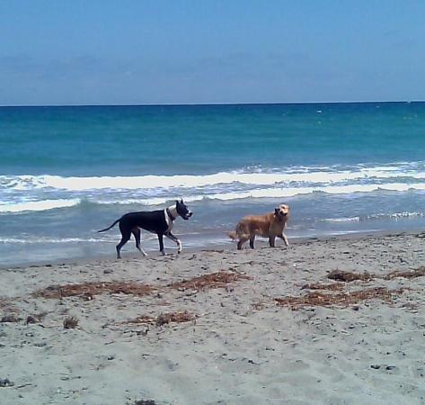 จูโนบีช, ฟลอริด้า: Juno Beach... in the picture, Valentino & Bailey