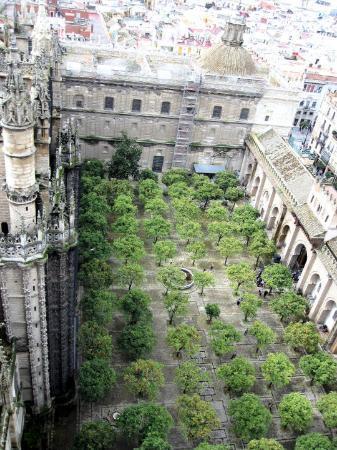 Seville Cathedral (Catedral de Sevilla): El Patio de los Naranjos de La Catedral de Sevilla