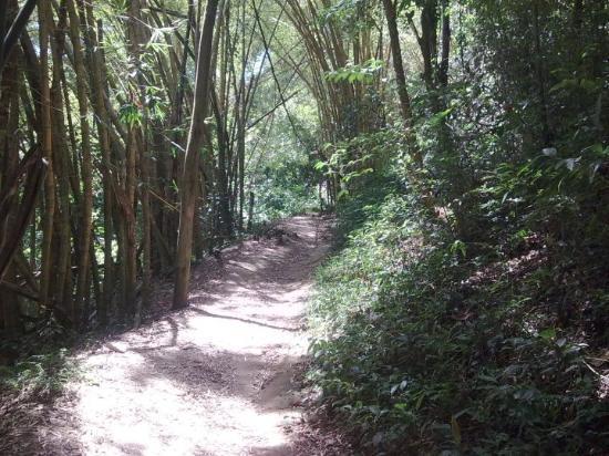 Ilha Grande, RJ: Caminho para a cachoeira da feiticeira