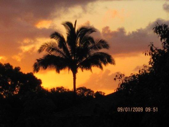 Pure Kauai