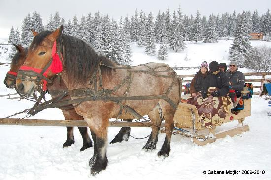 Cabana Motilor : Horse-drawn sleigh ride