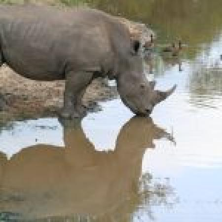 Kapama River Lodge: Rhino and reflection