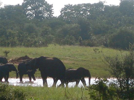 Harare, Zimbabwe: Elephants in the Morning