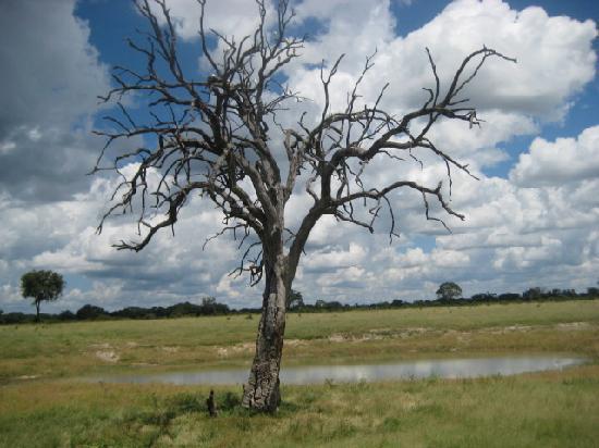 Harare, Zimbabwe: Egrets in Tree