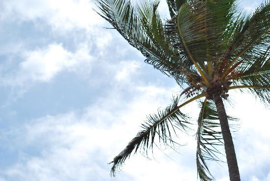 Majestic Colonial Punta Cana: Palm Tree at the beach