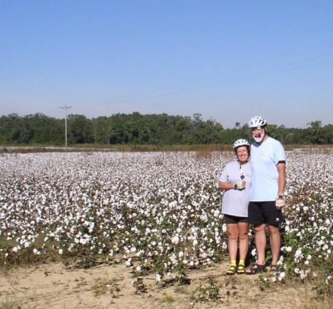 Henderson, NC: Cotton field, North Carolina