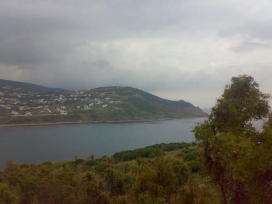 타바카 사진