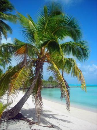 Сува, Фиджи: Blue Lagoons Fiji