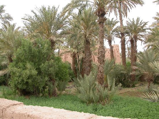 Les jardins de Tazzarine: La palmeraie