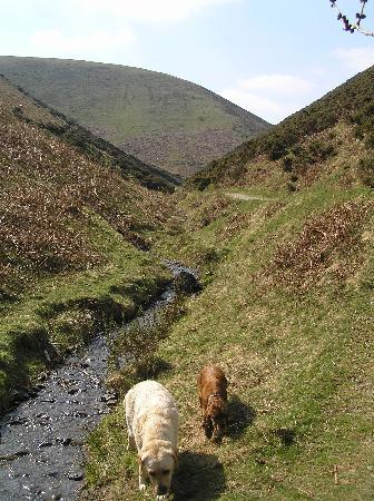 "The Longmynd: Out with ""Barking Mad"" group, enjoying a walk"
