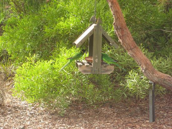 Llewellin's Guest House: Parrots feeding in garden