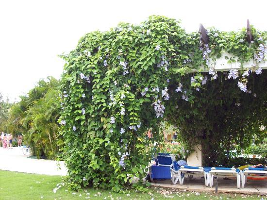 Punta Cana, Den dominikanske republikk: Beautiful flowers by the pool at Grand Paradise