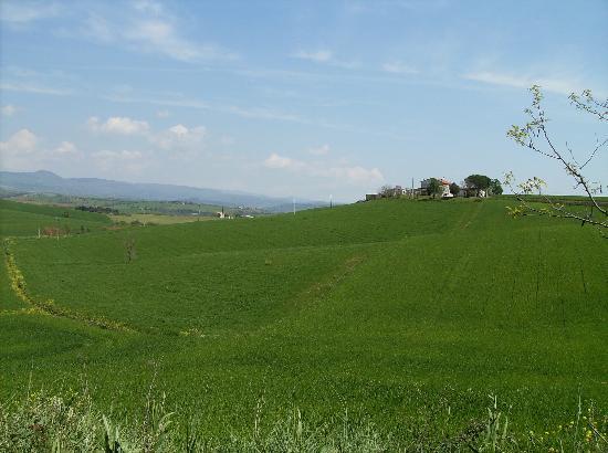 Agriturismo La Locandiera: strada verso l'agriturismo