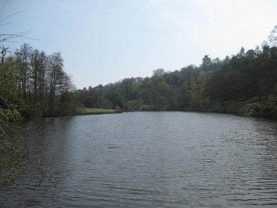 Winkworth Arboretum: The lake