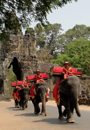 Tropanier Villa : This year the elephants are wearing red