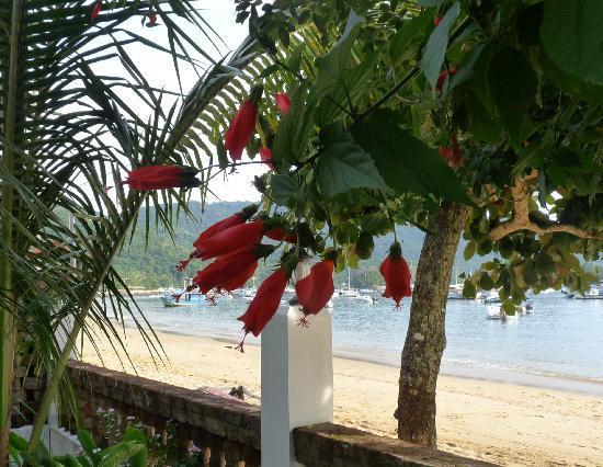 Pousada Manaca Inn: view from the breakfast table