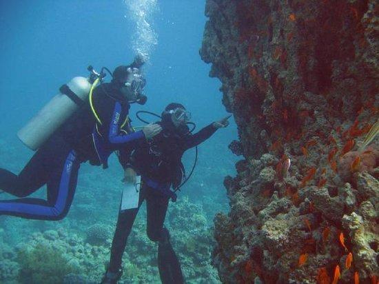 Aqaba Adventure Divers: naturalist instructions