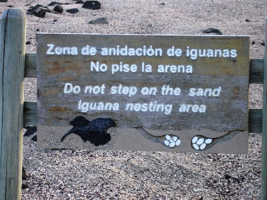 Hotel San Vicente Galapagos: Marine Iquana Nesting area is a short walk to the beach