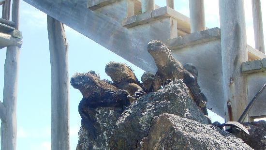 Hotel San Vicente Galapagos: They are everywhere!