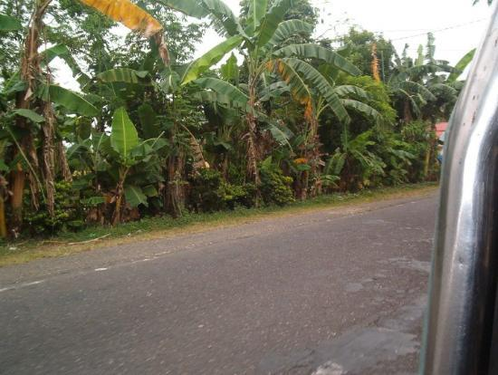 Sipocot, الفلبين: Taken on the road from Sipocot to Naga City.