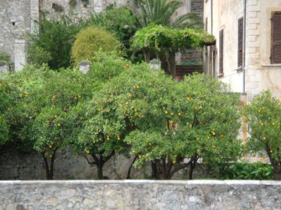 Limone sul Garda, Italy: Appelsintrær i Limone