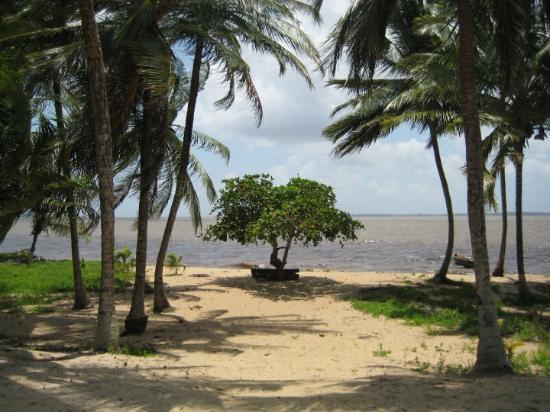 Paramaribo, Suriname: het eenzame boompje...maar erg mooi!
