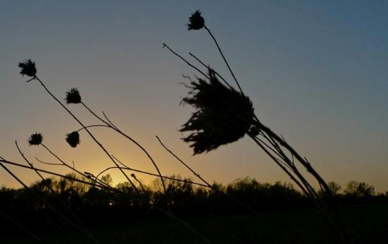New Bloomfield, MO: In the Wind.