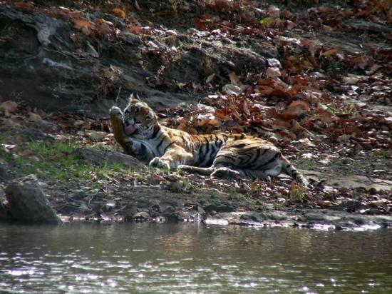 Foto de Bandhavgarh National Park