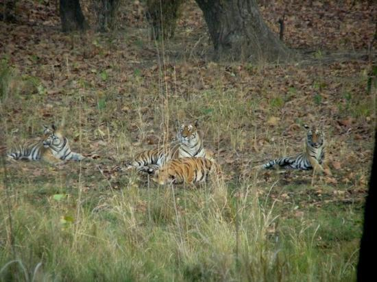 Bandhavgarh National Park-bild