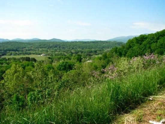 Charlottesville, Βιρτζίνια: Green Green Green