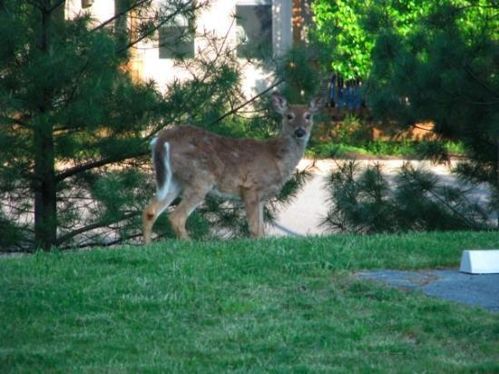 Mount Crawford, VA: ...and a family of deer...