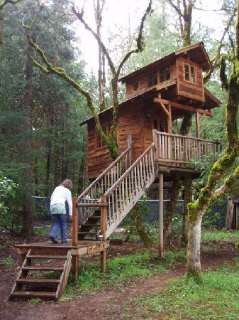 Out 'n' About Treehouse Treesort : The Serendipitree