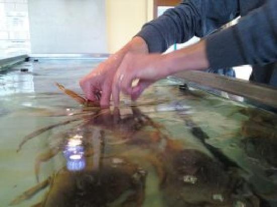 Pier 46 Seafood Market & Restaurant: Live Tanks with crabs & lobsters!