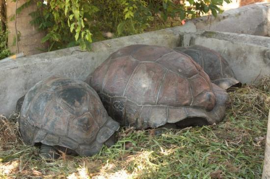 Praslin, Seychellerna: Seychelles - Tartarughe giganti