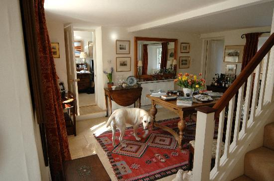 Wren House Bed & Breakfast: Charming interior and adorable Labrador