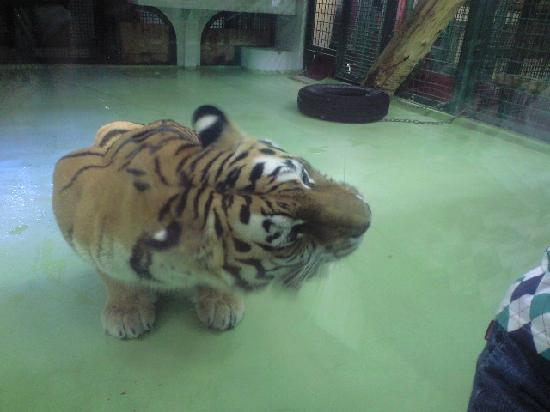 Maruyama Zoo: もぐもぐタイム