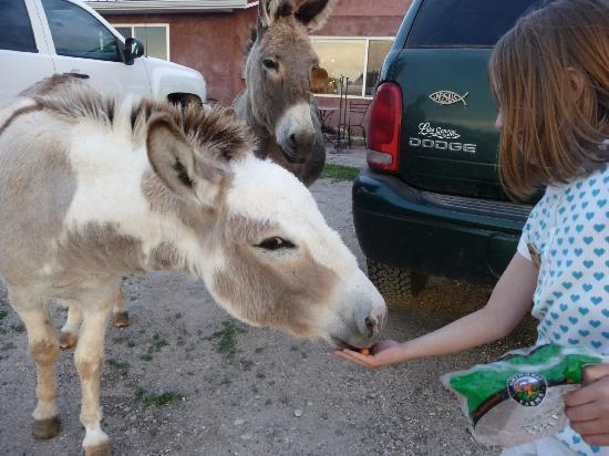 Interior, SD: my daughter feeding the burros