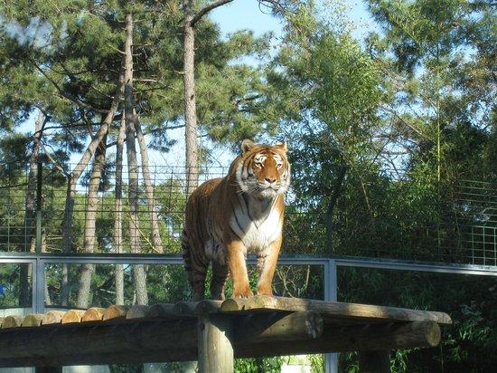 Zoo de la Palmyre : zoo
