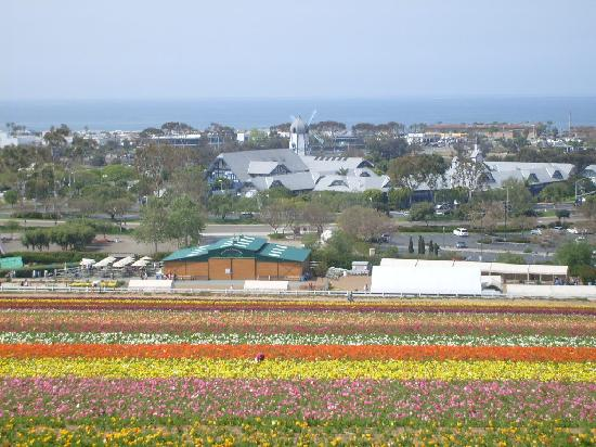 Grand Pacific Palisades Resort and Hotel: Grand Pacific view of flower fields and ocean