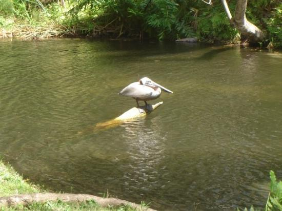 Crocodile Picture Of Sarasota Jungle Gardens Sarasota