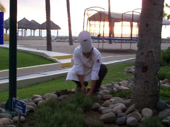 Club Regina Puerto Vallarta: chef picking fresh herbs