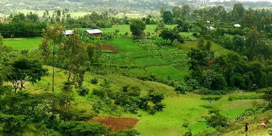 Sodo, Ethiopia: Green fields in Wolayta Zone