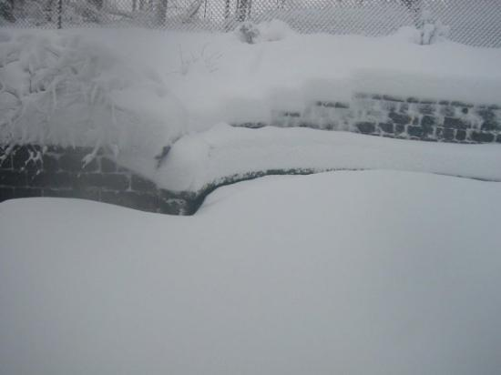 """Calico Rock, AR: A few pictures from around the house today.  We received about 20"""" of snow in the last several h"""